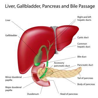 liver-gall-bladder-pancreas